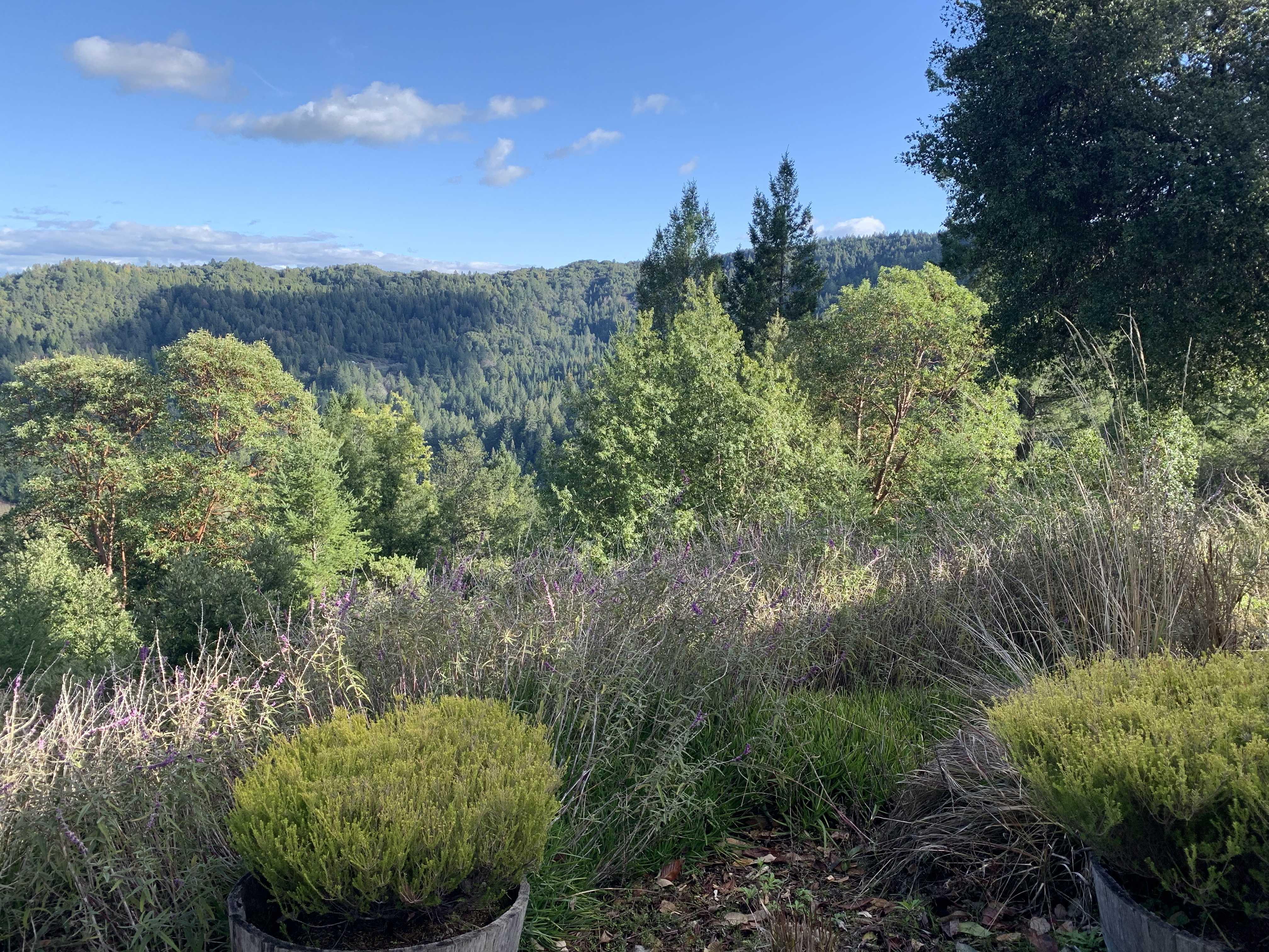 0000 Mill Creek Rd, Healdsburg, CA, 95448 - 24